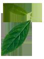 leaftitulo