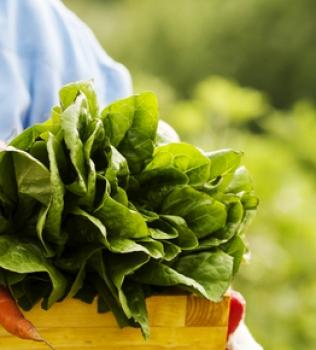 Slow Food: veja como se alimentar com mais prazer