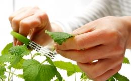 Ter horta em casa traz efeitos positivos para o corpo e a mente
